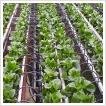 K&H a fenntartható agráriumért ösztöndíjpályázat 2017